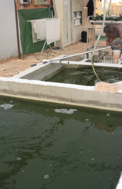 spiruline bassin